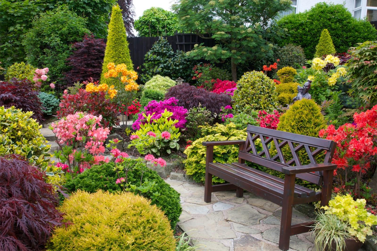 garden-seat-amongst-the-azalea-flowers